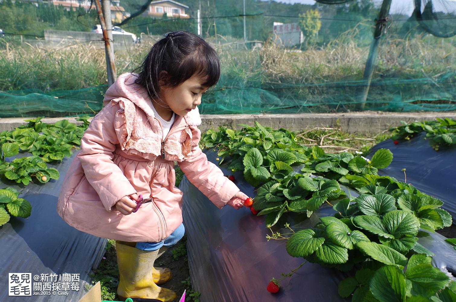 0117-關西採草莓-023.jpg