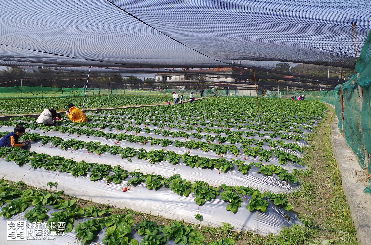 0117-關西採草莓-024.jpg