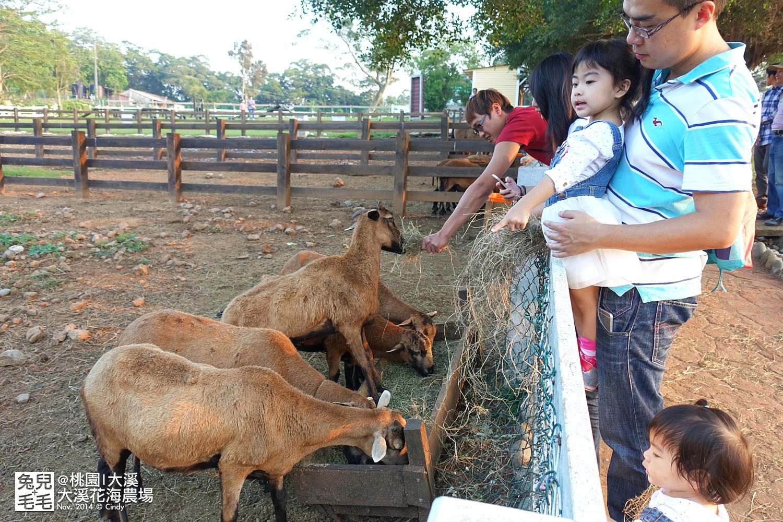 1121-大溪花海農場-21