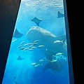 2015-0405-沖縄美ら海水族館-3.jpg