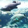 2015-0405-沖縄美ら海水族館-10.jpg