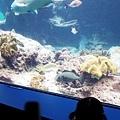 2015-0405-沖縄美ら海水族館-11.jpg