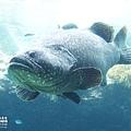 2015-0405-沖縄美ら海水族館-12.jpg