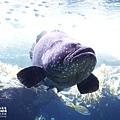 2015-0405-沖縄美ら海水族館-13.jpg
