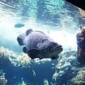 2015-0405-沖縄美ら海水族館-14.jpg