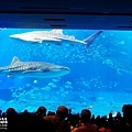 2015-0405-沖縄美ら海水族館-17.jpg