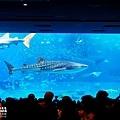 2015-0405-沖縄美ら海水族館-18.jpg