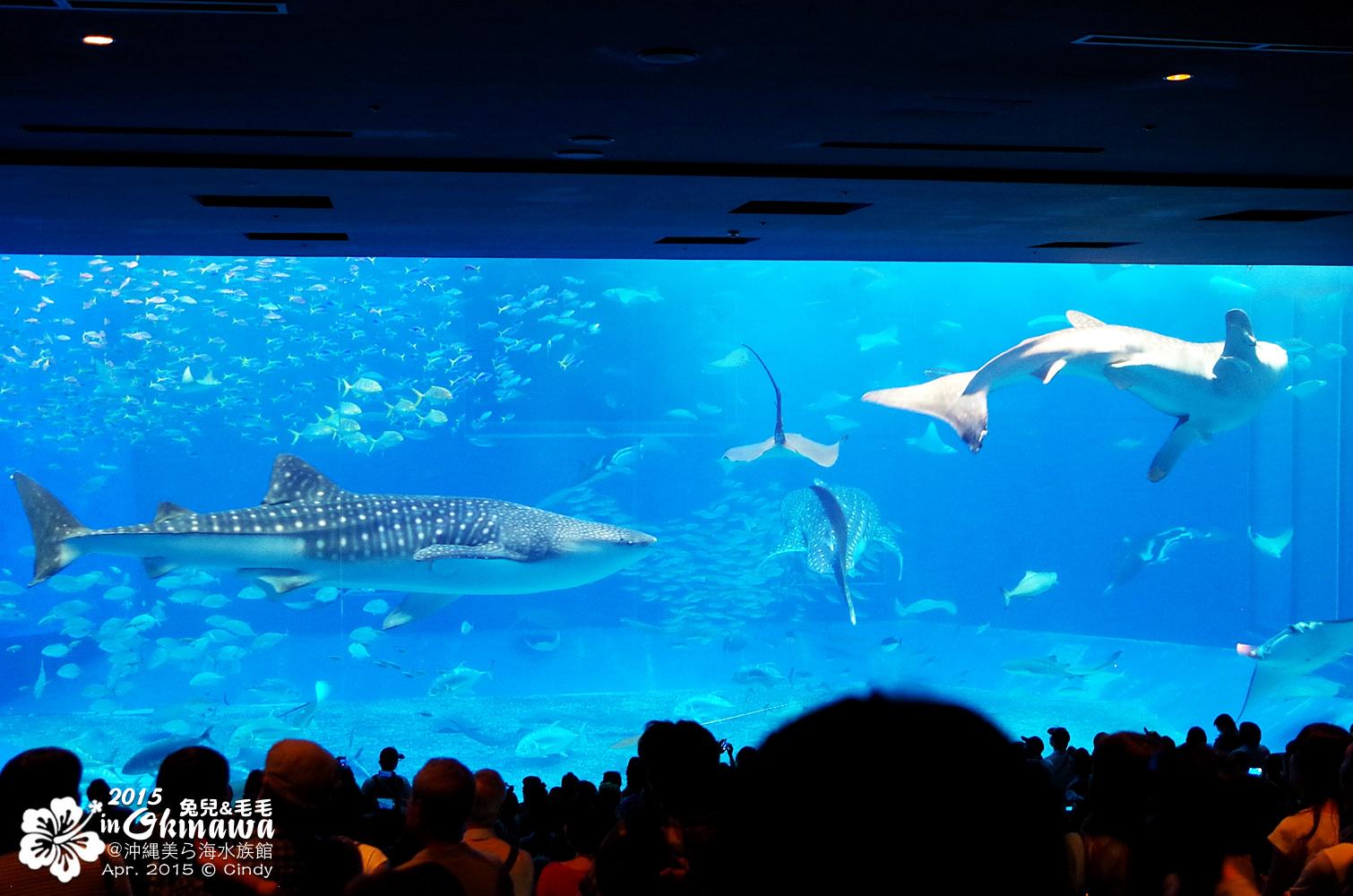 2015-0405-沖縄美ら海水族館-20.jpg