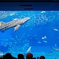 2015-0405-沖縄美ら海水族館-22.jpg