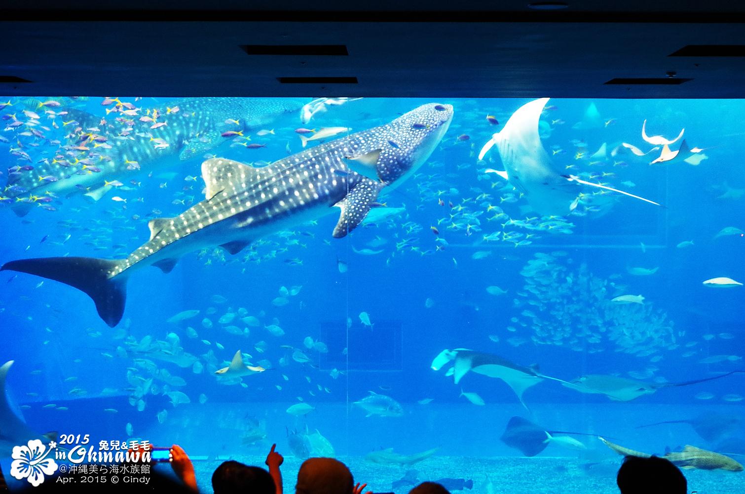 2015-0405-沖縄美ら海水族館-23.jpg