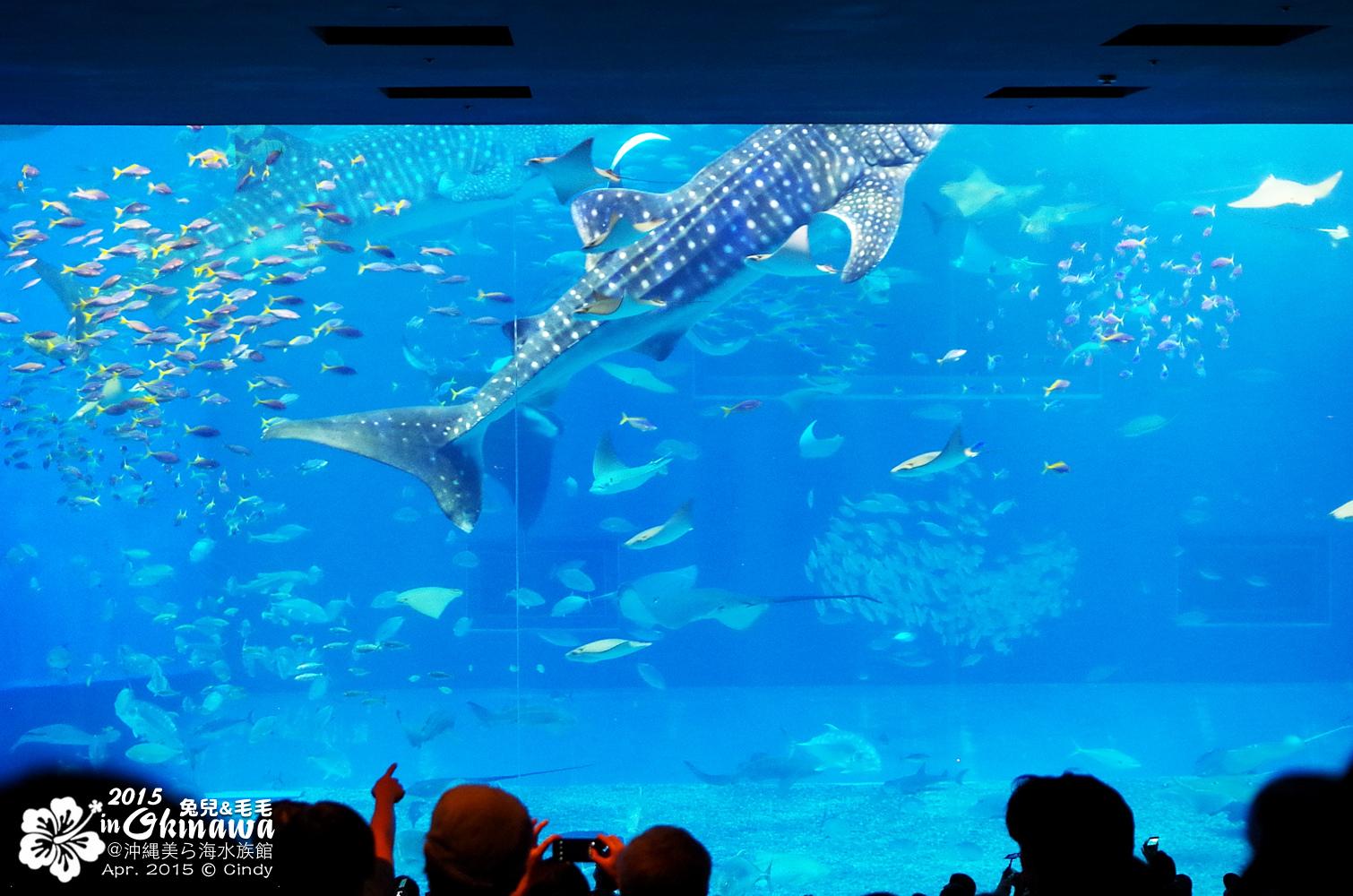 2015-0405-沖縄美ら海水族館-24.jpg