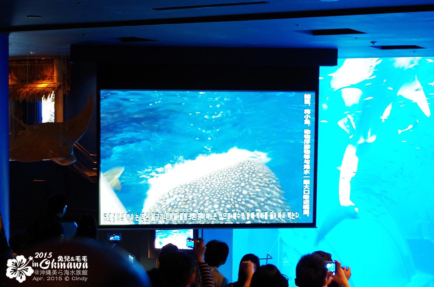 2015-0405-沖縄美ら海水族館-25.jpg