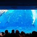 2015-0405-沖縄美ら海水族館-26.jpg