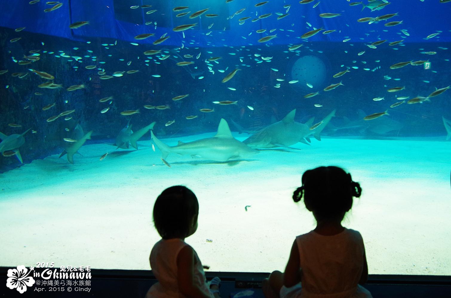 2015-0405-沖縄美ら海水族館-27.jpg
