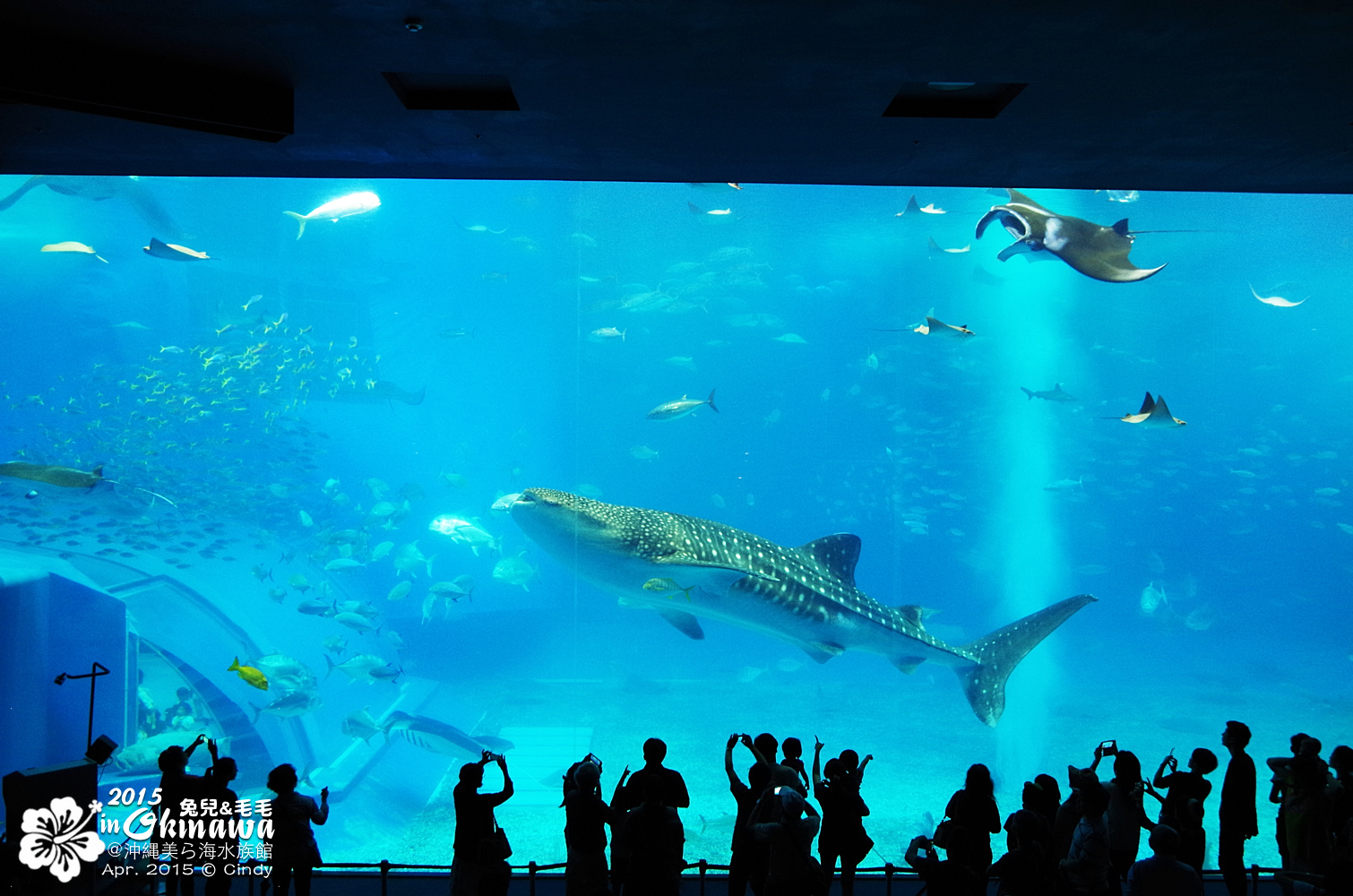 2015-0405-沖縄美ら海水族館-29.jpg