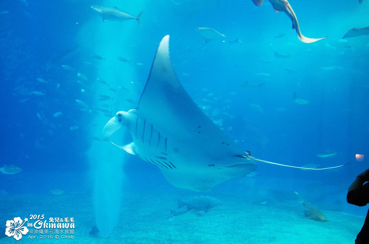 2015-0405-沖縄美ら海水族館-30.jpg
