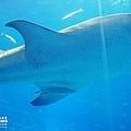 2015-0405-沖縄美ら海水族館-31.jpg