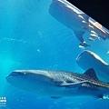 2015-0405-沖縄美ら海水族館-32.jpg