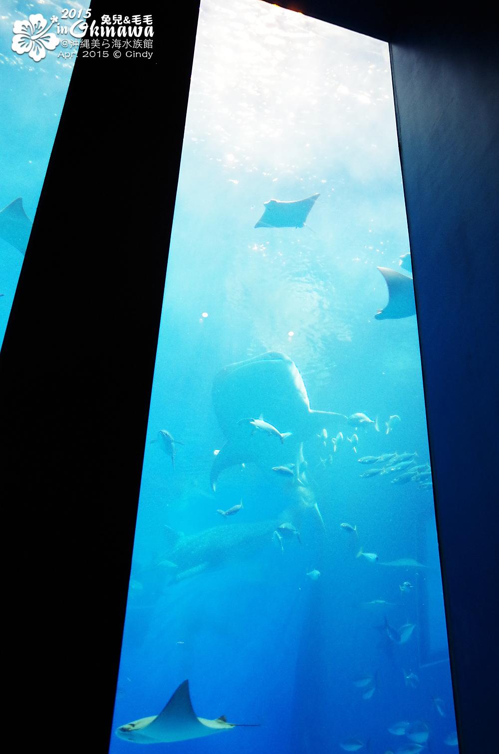 2015-0405-沖縄美ら海水族館-33.jpg