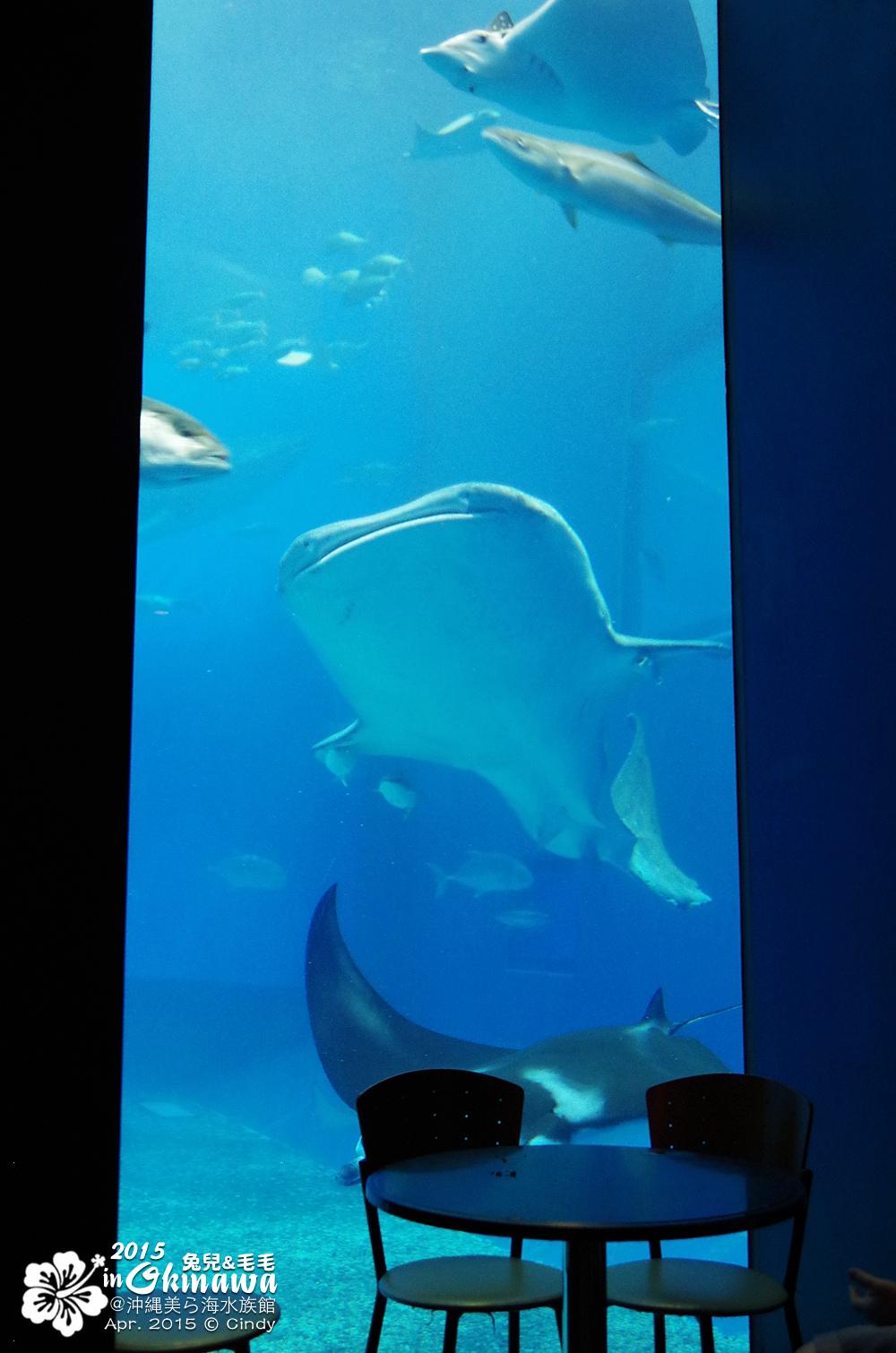 2015-0405-沖縄美ら海水族館-34.jpg