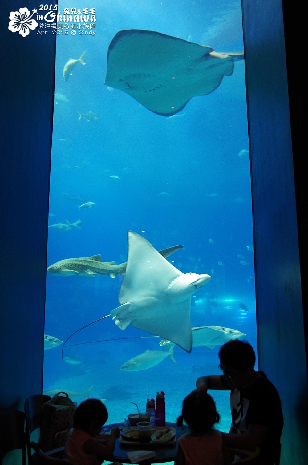 2015-0405-沖縄美ら海水族館-35.jpg