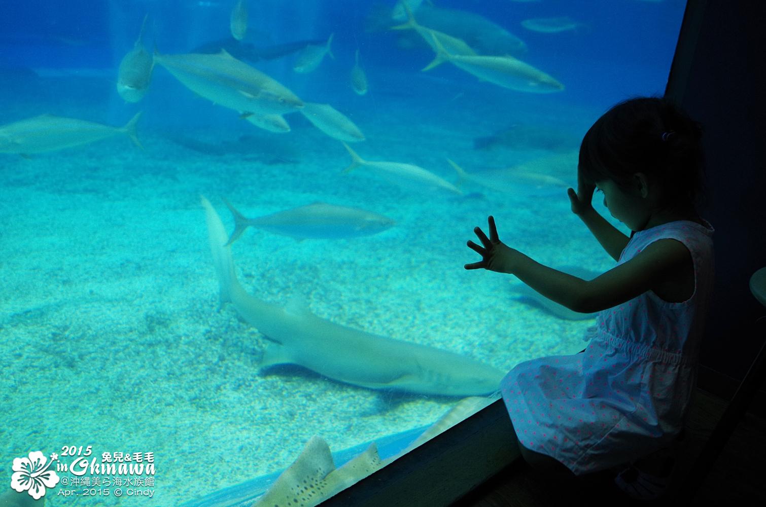2015-0405-沖縄美ら海水族館-36.jpg