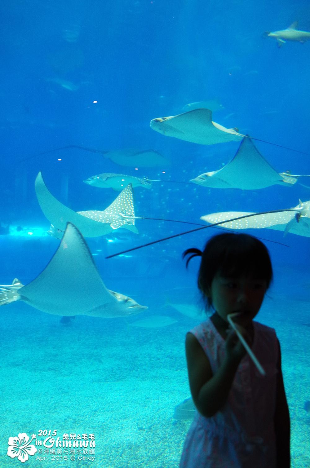 2015-0405-沖縄美ら海水族館-39.jpg