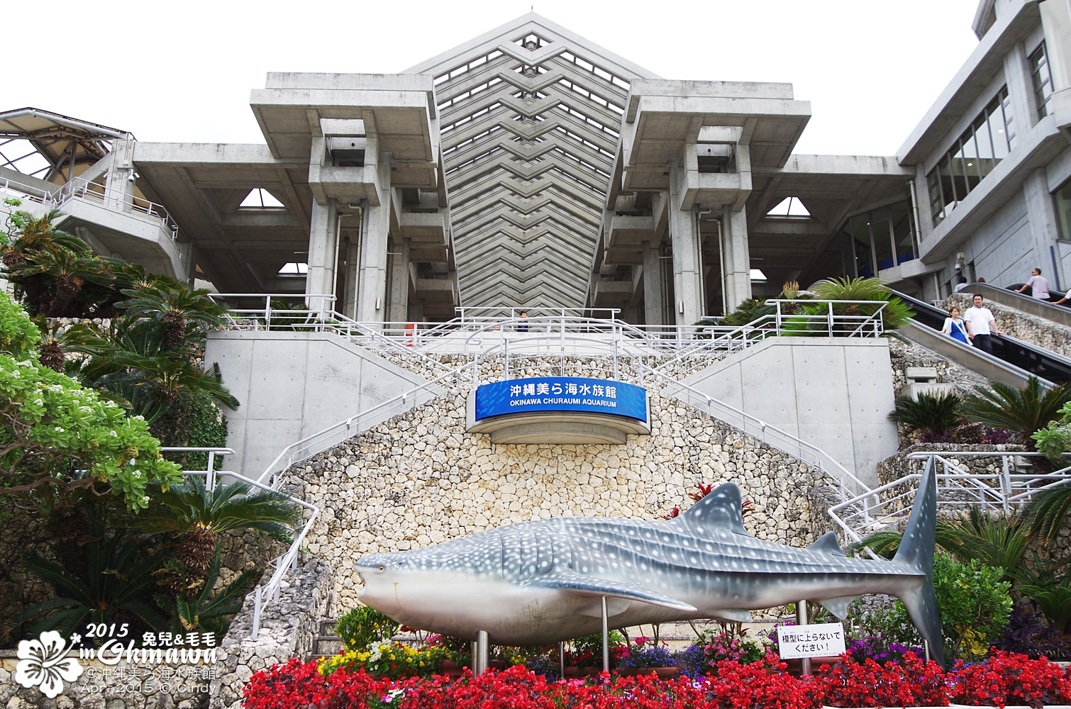 2015-0405-沖縄美ら海水族館-41