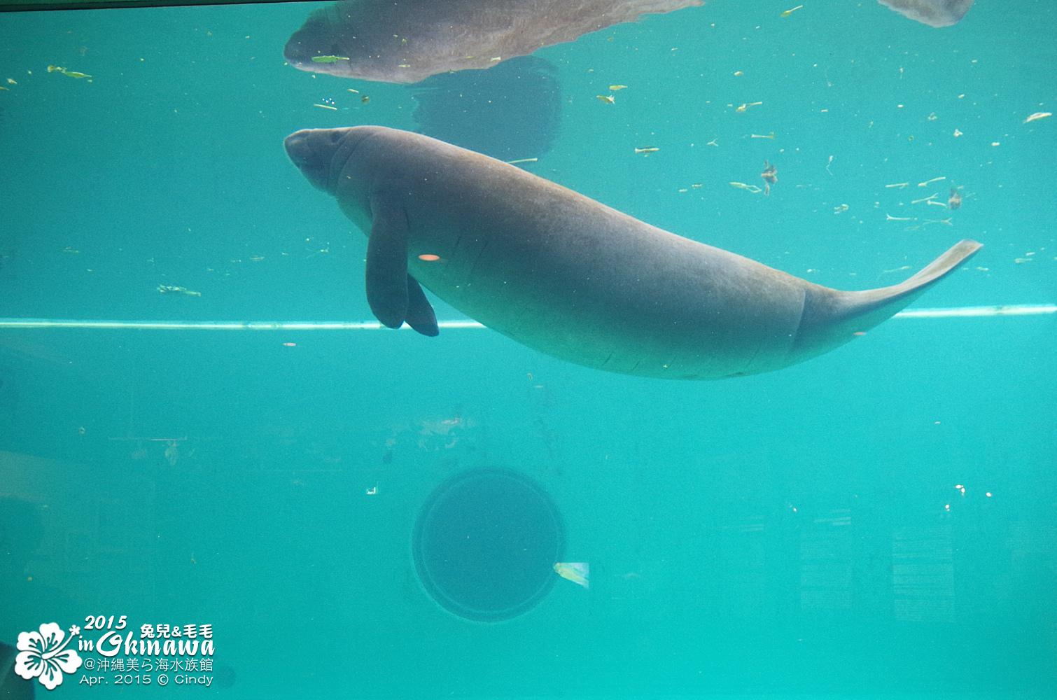 2015-0405-沖縄美ら海水族館-42