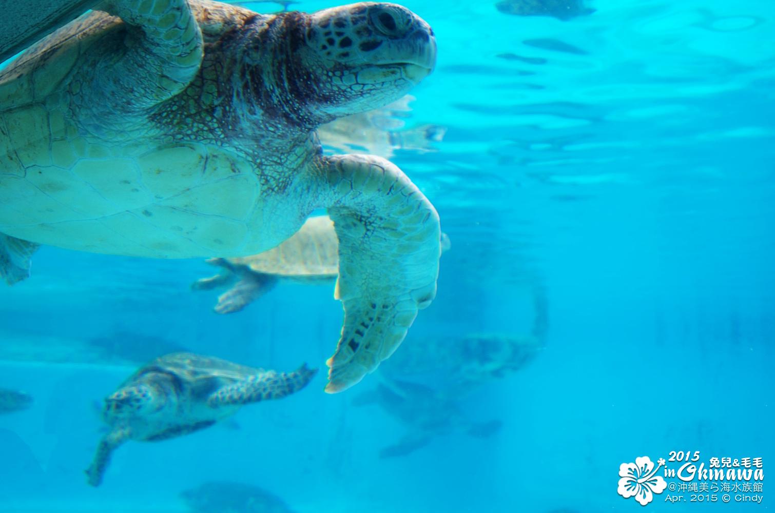 2015-0405-沖縄美ら海水族館-43