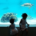 2015-0405-沖縄美ら海水族館-44