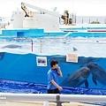 2015-0405-沖縄美ら海水族館-47