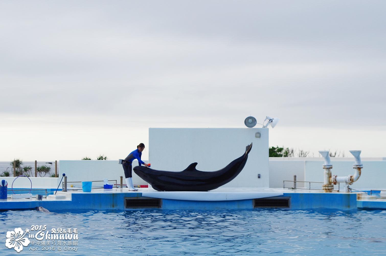 2015-0405-沖縄美ら海水族館-52