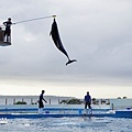 2015-0405-沖縄美ら海水族館-54