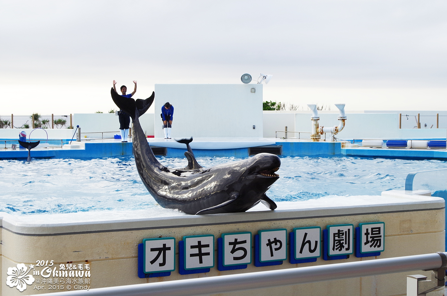 2015-0405-沖縄美ら海水族館-55
