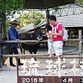 2015-0407-琉球村-41.jpg