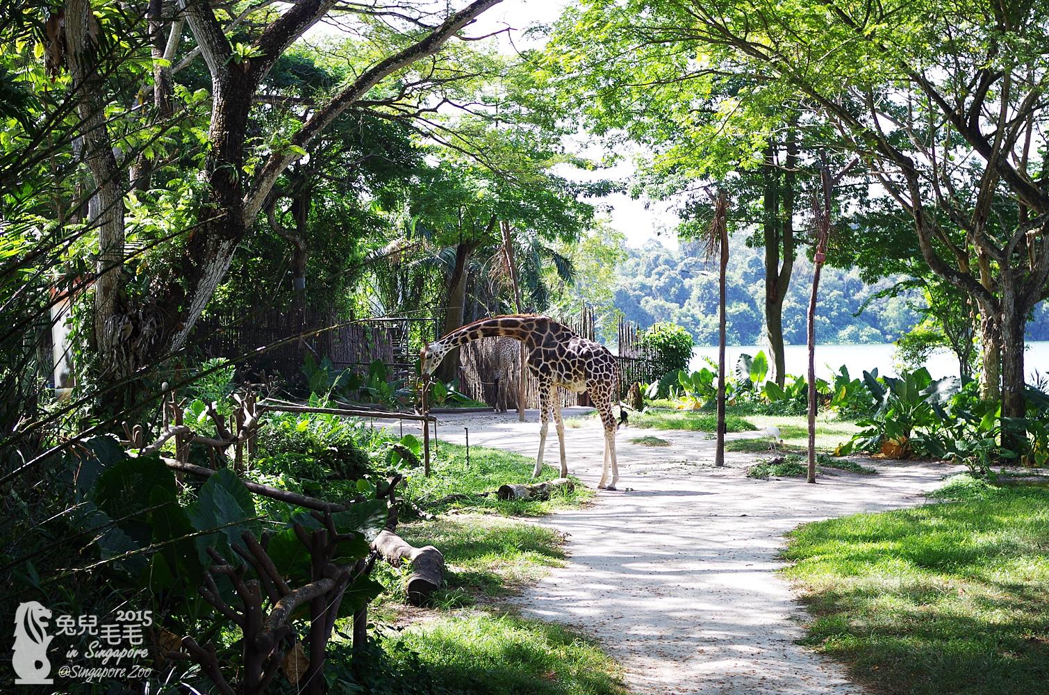 0218-Singapore Zoo-07.jpg