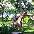 0218-Singapore Zoo-08.jpg