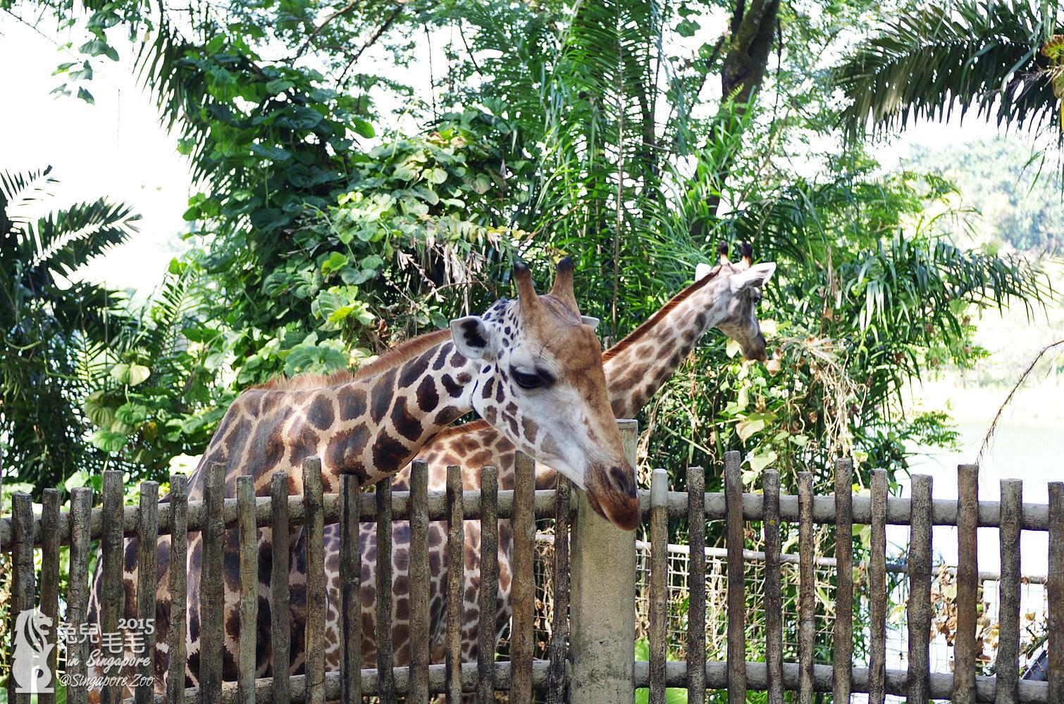 0218-Singapore Zoo-09.jpg