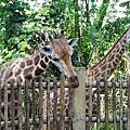 0218-Singapore Zoo-10.jpg