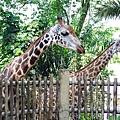 0218-Singapore Zoo-11.jpg