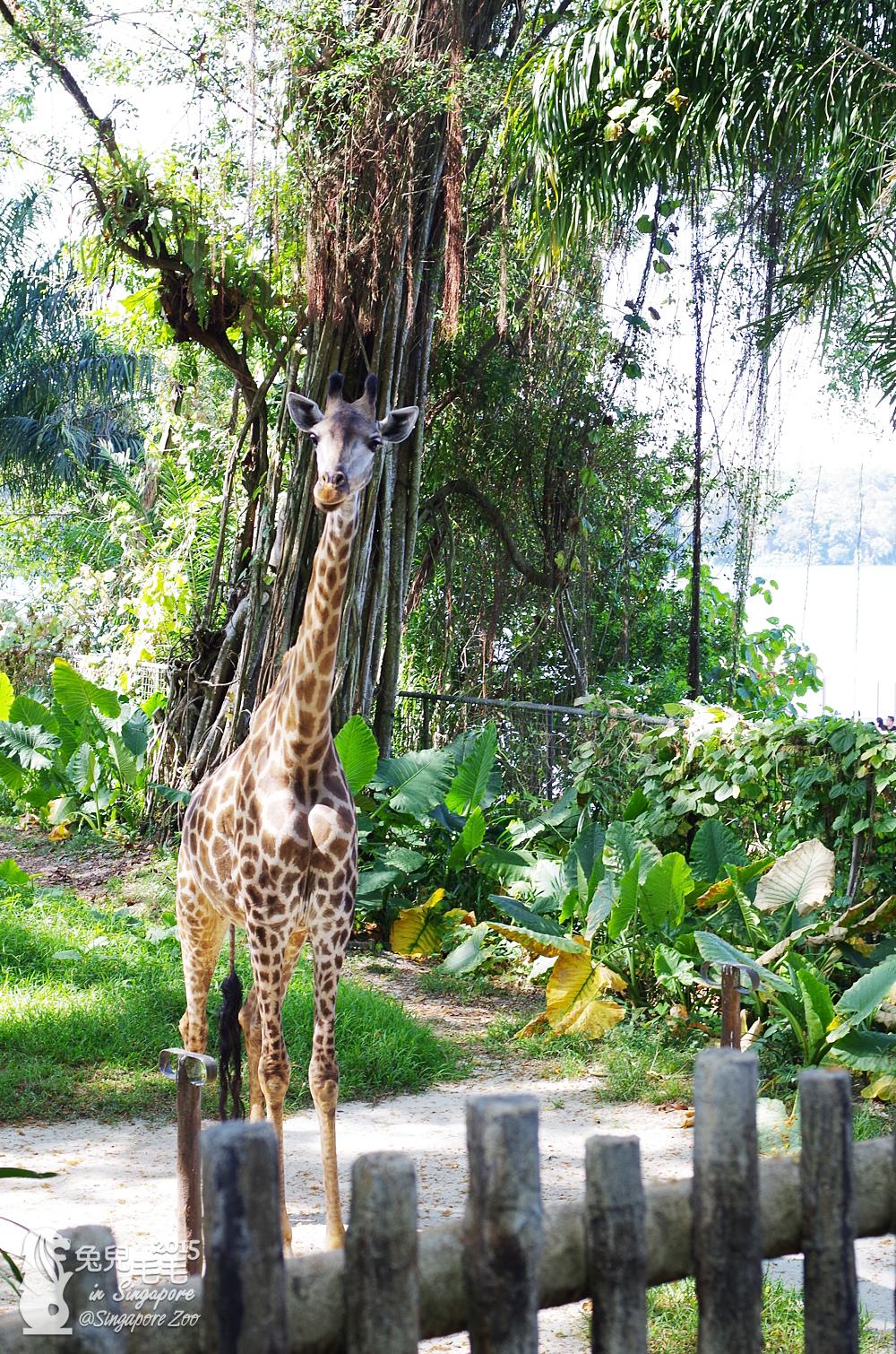 0218-Singapore Zoo-12.jpg