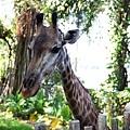 0218-Singapore Zoo-13.jpg
