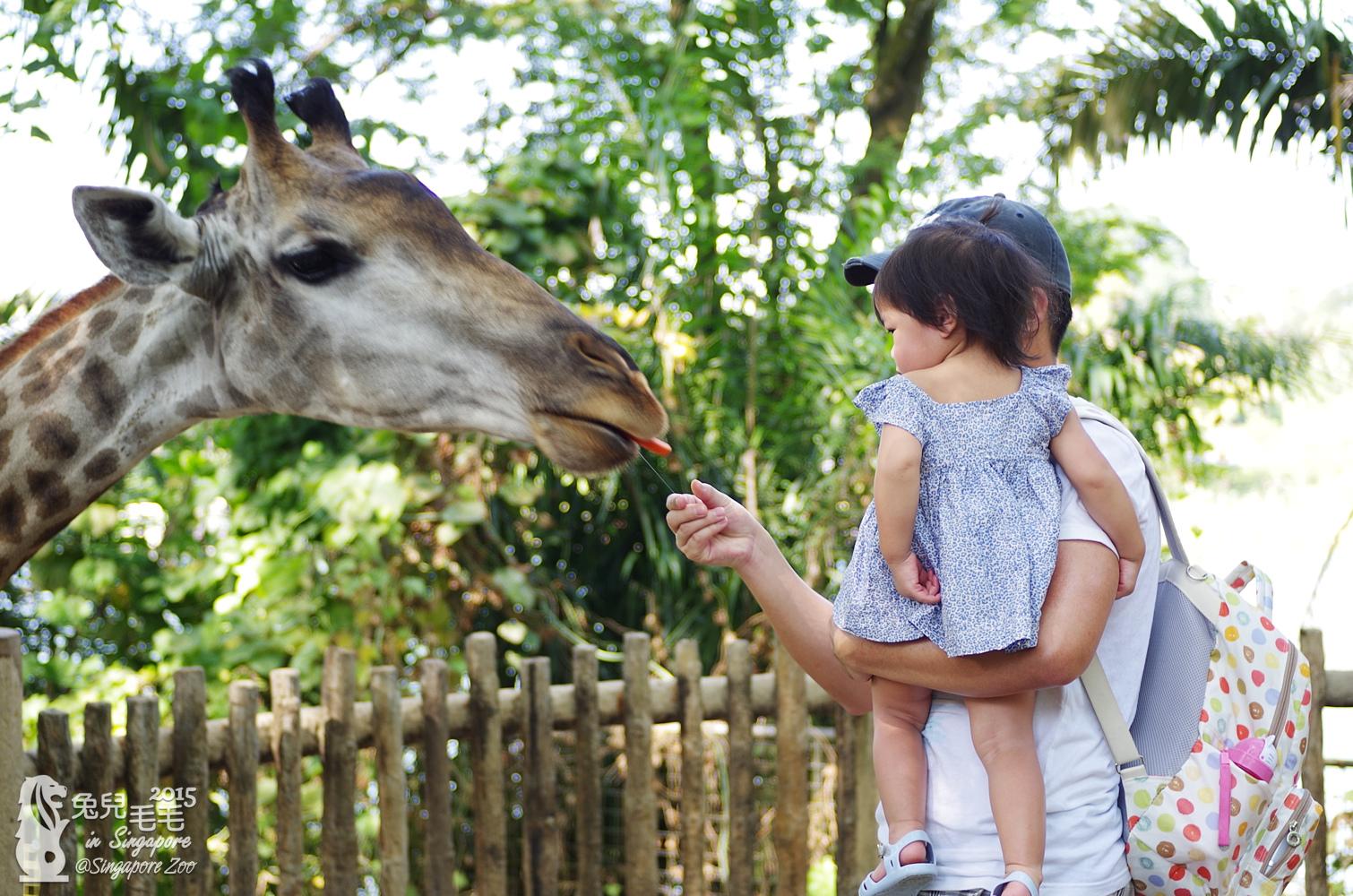 0218-Singapore Zoo-16.jpg