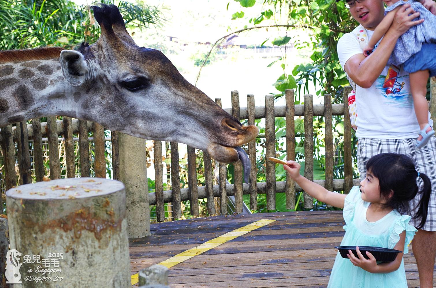 0218-Singapore Zoo-18.jpg