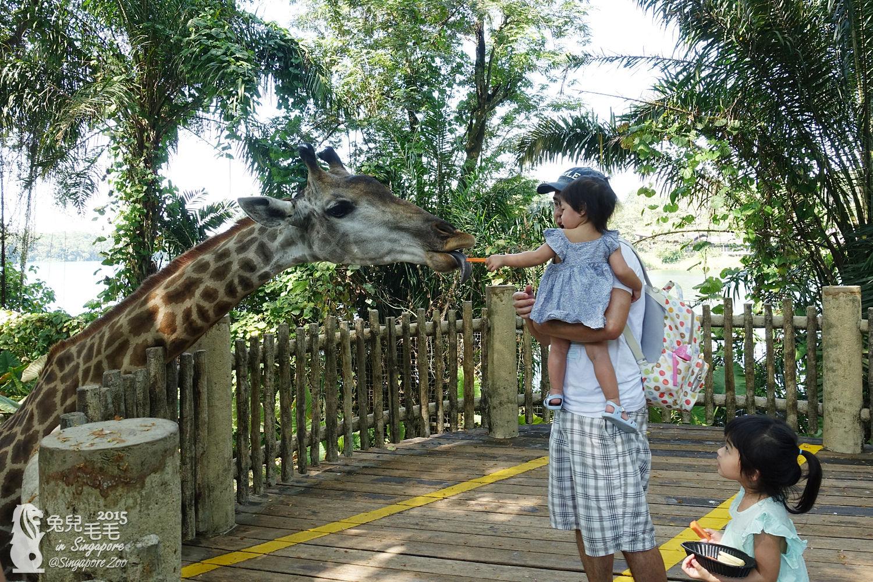 0218-Singapore Zoo-19.jpg