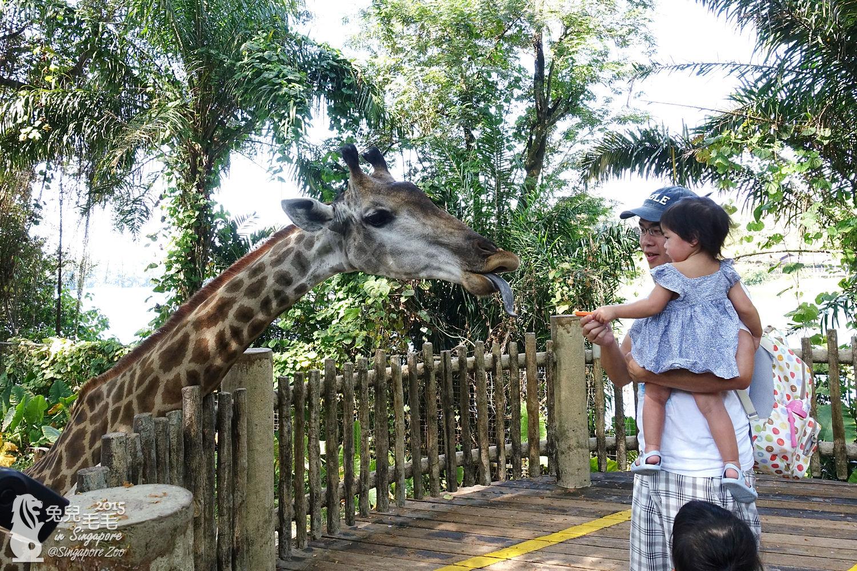 0218-Singapore Zoo-20.jpg