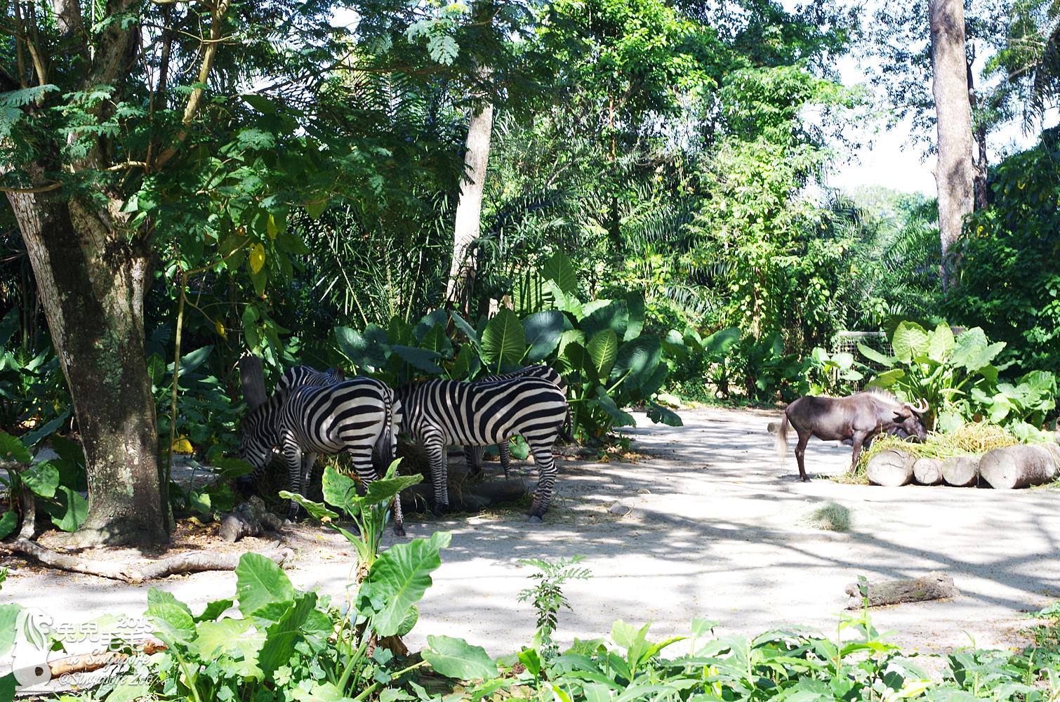 0218-Singapore Zoo-21.jpg