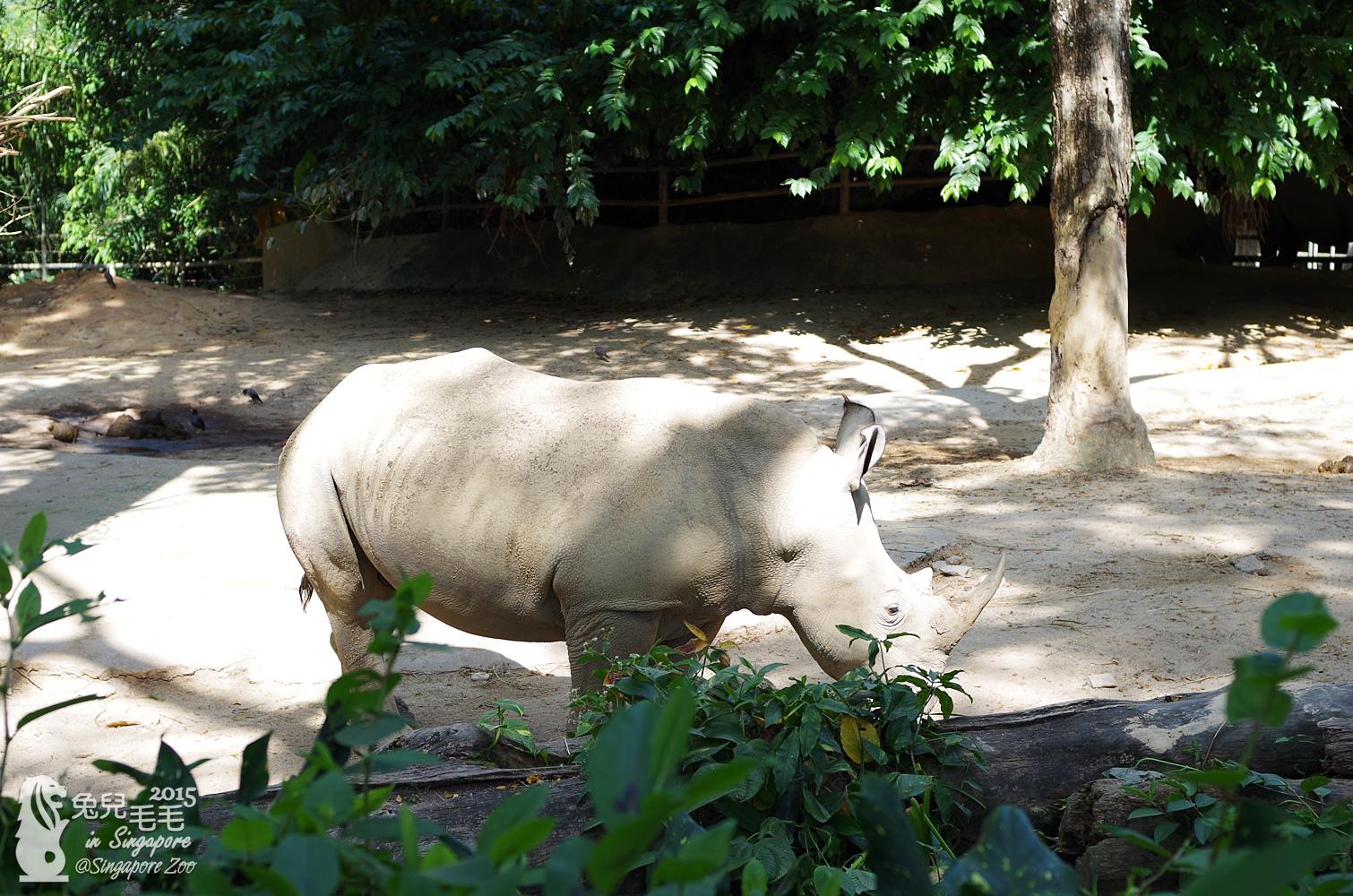 0218-Singapore Zoo-22.jpg