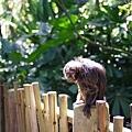 0218-Singapore Zoo-25.jpg